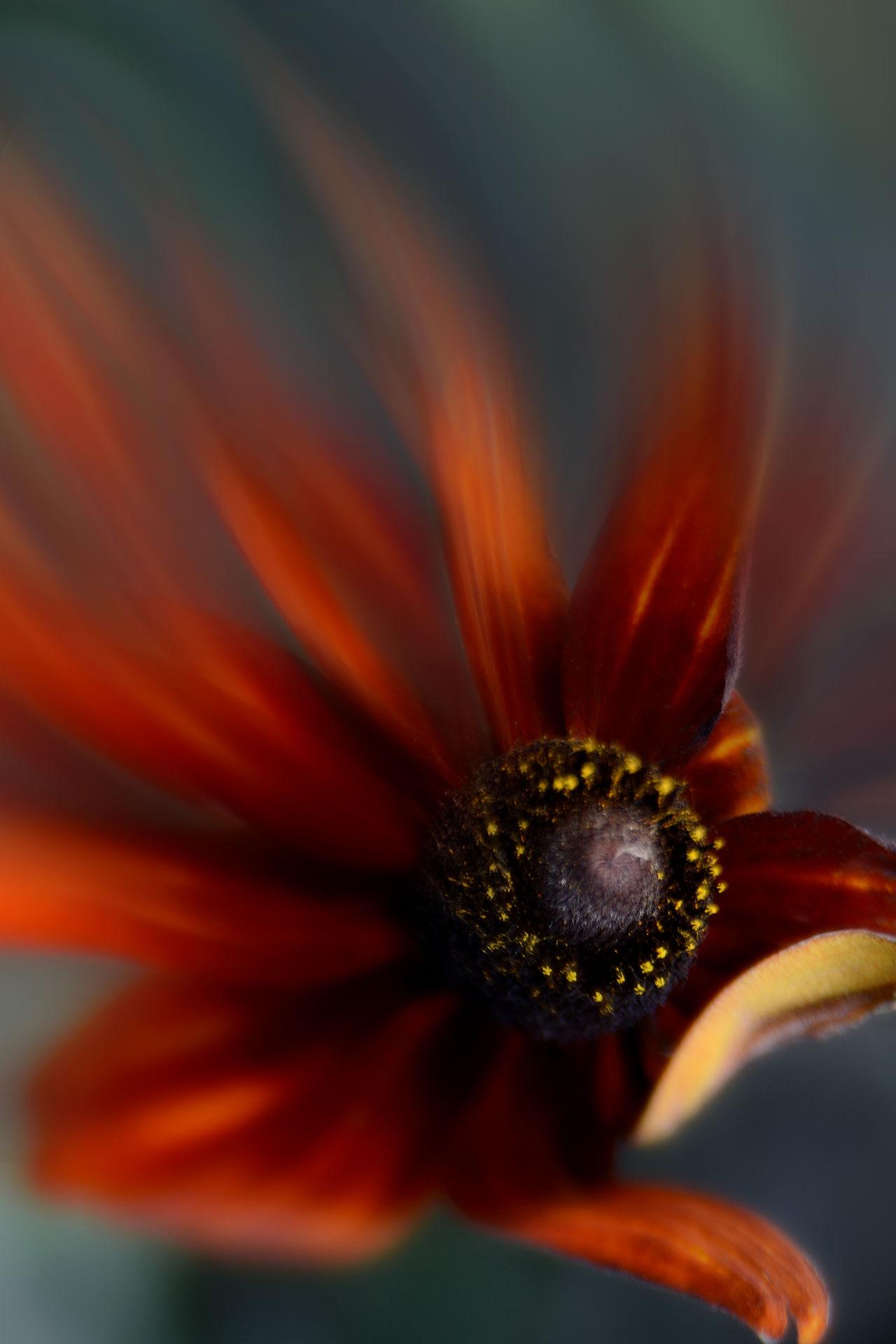 Painterly photography - Secret garden